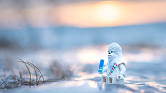 The sun sets down one last time in 2016 (Reiterlied) Tags: 18 35mm chewbacca chewie d500 dslr finland ice lego legography lens minifig minifigure nikon oulu photography prime reiterlied snowbacca starwars stuckinplastic sunset toy winter