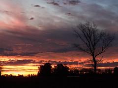 Cielos de invierno [explored] (Letua) Tags: bragado atardecer cielo colores contraluz sky colours clouds backlight sunset tree silhouette silueta