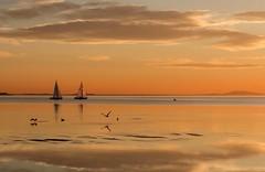 Envol... (J&S.) Tags: balaruc france hérault étang thau mer voilier oiseau soleil coucherdesoleil orange envol voeux