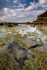 Jangle Jungle (Rodney Campbell) Tags: coalcliff seaweed ocean water rock cpl reflection gnd09 sky sunrise clouds newsouthwales australia au