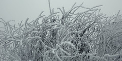 frozen nature 8155 (s.alt) Tags: nature natureunveiled frost winter ice rauhreif cold kalt morgen eiskristall kristallförmig vereist niederschlag hoarfrost whitefrost rime frostyrime frozen detail icecrystal frozennature macro blatt frosted