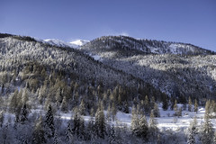 morning after snow storm (Tonio06fr) Tags: mercantour forest mountain moutains larch snow snowy cold nopeople stdalmasleselvage winter