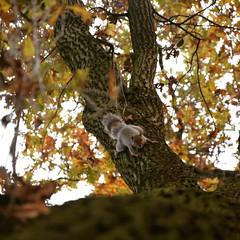 Fra gli alberi #discesa#downhill#bajando#curiosità#curiosity#curiosidad#girididomenica#vueltaseldomingo#lapsonsunday#autunno#autumn#otono#scoiattolo#squirrel#ardilla#parcodelvalentino#torino#turin#piemonte#italia#italy
