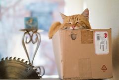 Ginger cat in a cardboard box (Ivan Radic) Tags: nikon1v1 nikon1nikkor32mmf12 nikon 1 nikkor 32mm f12 cat katze v1 bokeh ginger cardboardbox kartonschachtel explore explored feline csc evil ilc mirrorless spiegellos systemkamera systemcamera