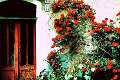 #71G73 (Manolo) Tags: flowers red roses house abandoned home scale xprocess decay surreal tlpoedeleted ghosts