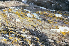 Lichen in Oyster Haven (Mamluke) Tags: ireland sun sunlight rock grey gris grigio gray chartreuse grau irland lichen tageslicht sunlit irlanda irlande grijs zonlicht striated ierland patchy ire lumiredusoleil luzdelsol mamluke oysterhaven  lucesolare