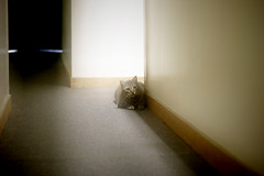 ... (freestyla) Tags: cats cat kitten kitty kitties purr stealth meow chewie stalking hallways chewbacca