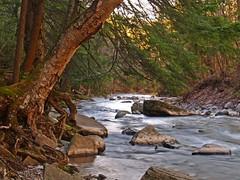 Leaning (Matt Champlin) Tags: tree river evening spring twilight searchthebest upstatenewyork waterblur leaning chittenango