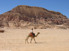 Hey! It´s me! - Sinai Camel Adventure!