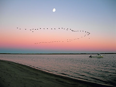 Canada Geese at Chatham, Cape Cod (Chris Seufert) Tags: moon fall beach birds ma geese south chatham cape cod