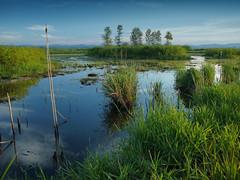 Ecotopia (B. Zyrogerg) Tags: blue lake green oregon catchycolors ilovenature pond olympus fernridge naturescenes e500 zd 1454