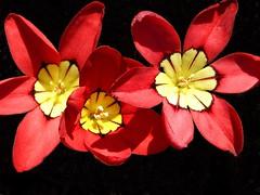 :-) (honey3bun) Tags: pink flowers red colour nature natural background lovely splash kiss2 kiss3 kiss1 kiss4 kiss5 colourwhores evenifisaysomyself