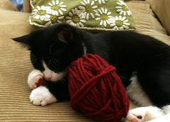 Playing with ball of yarn (Dr. Hemmert) Tags: pet cats pets playing cute animal cat kitten kat chat sweet kitty whiskers yarn gato playfull paws artemis felixdomesticus