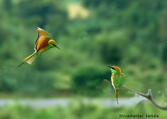 It works, lets stop not untill v reach (shivanayak) Tags: india birds d70 shiva karnataka beeeater  shivanayak attributionnoncommercialsharealikelicense explored specanimal
