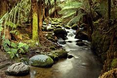 Stream of life (Walmink) Tags: creek forest rainforest australia tasmania hdr 3xp