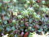 (jaja_1985) Tags: trees macro tree closeup garden moss palm palmtrees palmtree