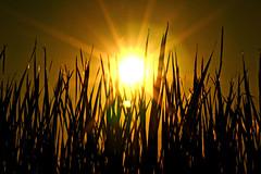 the sun shines on everyone
