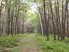 Right of Way from the camp (irish blue eyes) Tags: camp mountain driftwoodpa masonhill