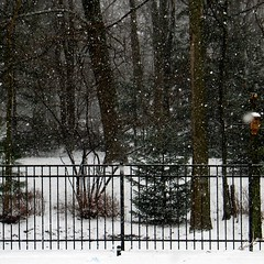 Winter - snow (blmiers2) Tags: trees winter white snow newyork nature fence geotagged webster blm18 blmiers2