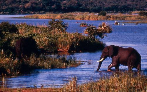 Imagenes de Animales de Sudafrica muy buenas
