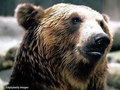 In profile.... (Dave - aka Emptybelly) Tags: bear animal fauna fur furry sony cybershot seoul southkorea sonycybershot eb dscs40 ursine dgr emptybelly obsessiveflickrites sonycybershotdscs40