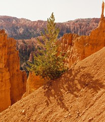 A solitary upright spine... (monika & manfred) Tags: usa brown landscape beige mm solitary arid americanwest rockformations 4corners intheshadowutata msh0308 msh030813 msh0613 msh06135