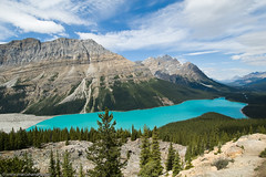 Peyto Lake Banff (Marc Shandro) Tags: lake canada mountains calgary nature rockies outdoors rocky ab alberta banff gettyimages peyto