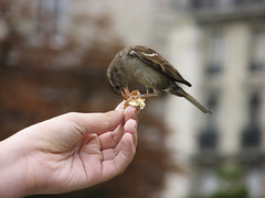 a bird in the hand... (hans s) Tags: holiday france hand 2006 sparrow proverb