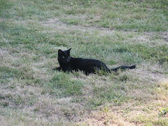 PICT0182 (wickenpedia) Tags: archaeology cat mog timeteam wicken wwwwickenarchaeologyorguk leocassandramcneir