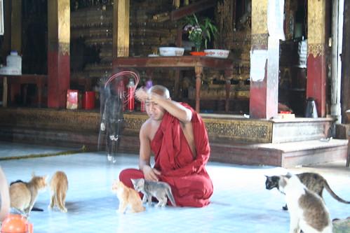 Cat Temple Inle_20060425_004
