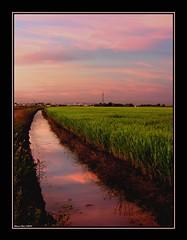 And the sky became pink (alonsodr) Tags: sunset atardecer sevilla andaluca nikon topf75 quality 500v50f ricefields alonso alonsodr lapuebladelro arrozales haltenhof abigfave