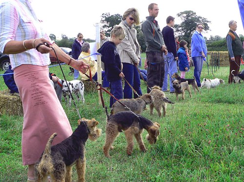 Terrier Show - Waiting