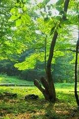 02 (Sakura0213) Tags: tree japan hdr japanhdr