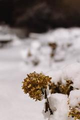 (lisetgarcia76) Tags: lrthefader snow snowfall winter cold nighttime night wonderland