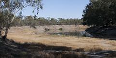 2016.11.17.07.29.37-Darling River (www.davidmolloyphotography.com) Tags: newsouthwales darlingriver menindee kinchega kincheganationalpark