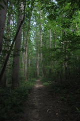 evening forest (Molly Des Jardin) Tags: park blue trees sky plants usa brown green leaves forest state pennsylvania earth path dirt trunks 2014 undergrowth susquehannock drumore 43215mm