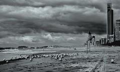 Life's a Beach (jenni 101) Tags: bw beach mono stormy queensland goldcoast hcs seqld nikond3300 monochromemonday