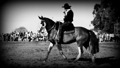 Num picao-oveiro pampa (Eduardo Amorim) Tags: brazil horses horse southamerica brasil criollo caballo cheval caballos cavalos pelotas pferde cavalli cavallo cavalo gauchos pferd riograndedosul pampa hest hevonen campanha brsil chevaux gaucho  amricadosul hst gacho  amriquedusud  gachos  sudamrica suramrica amricadelsur  sdamerika crioulo caballoscriollos criollos   costadoce americadelsud  crioulos cavalocrioulo americameridionale caballocriollo eduardoamorim cavaloscrioulos