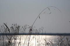 Ravenna (invisible_G) Tags: sea italy flower girl landscape italia uncle mum ravenna wonderfull marinaromea