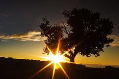 Sonnenuntergang im Burgenland (keko1313) Tags: sunset sun tree silhouette clouds evening sonnenuntergang felder wolken fields sonne baum
