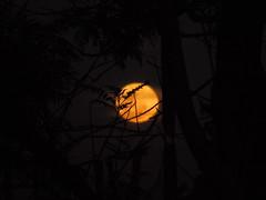 DSC00640 (VenilsonPereira) Tags: brazil sky moon tree beautiful brasil céu amarelo linda lua arvore yallow