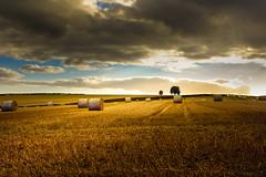 Back home........ (Eric Goncalves) Tags: autumn england colors golden nikon warm gloucestershire d7200 nikond7200 nikon18140