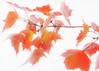 to infinity & beyond (Hal Halli....happy everything!!) Tags: autumn trees light fall love nature crimson leaves amber woods ngc change coth sharingart coth5