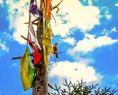 "Perched bird (Paul Nicodemus) Tags: travel people mountains rain clouds landscapes skies azure adventure journey solo odyssey assam himalayas valleys unplanned tawang natives bomdila tezpur ""westbengal"" ""arunachalpradesh"" ""bumlapass"" ""selapass"" ""paulartography"" ""paulnicodemus"
