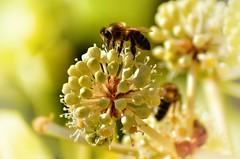 Anglų lietuvių žodynas. Žodis apiology reiškia apiologija lietuviškai.