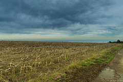 campo de maiz (GuillerML) Tags: landscapes nikon asturias paisaje campo nikkor maiz 18140 d3200 playadelsilencio guillerml