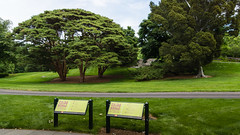 2015-06-25-134046_New York_Bronx, Botanical Garden