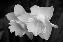 2015 05 03_d7100_0007 (swedgatch (Missing my Father)) Tags: life flowers light blackandwhite bw flower macro art love nature beautiful beauty by naked lens photography prime photo spring nikon photographer dof angle artistic little photos sweden stockholm live perspective things photographs photograph tiny take tele capture tamron d7100 swedgatch