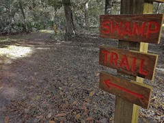 2 Mile Swamp Walk at Silver River State Park (johnandmary.F) Tags: ocalafl silverspringsstatepark