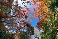 Colorful Sky 2 (Yusukiy) Tags: sony sigma15mmf28exdgdiagonalfisheye sony7 sony7ilce7 7ilce7